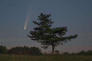 Fenyőfa és üstökös