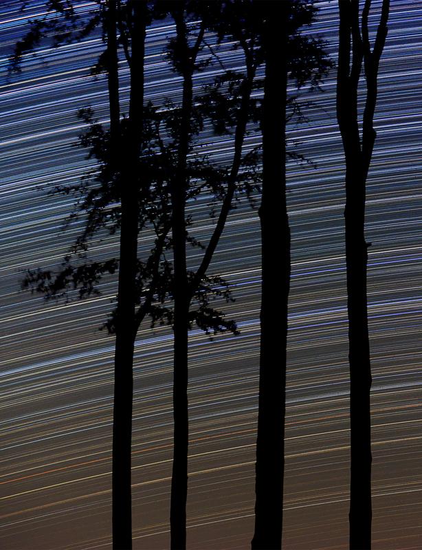 Bükkfák csillagívek előtt