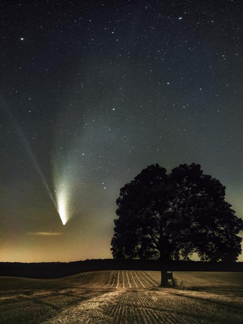 Mindenki kedvenc üstököse